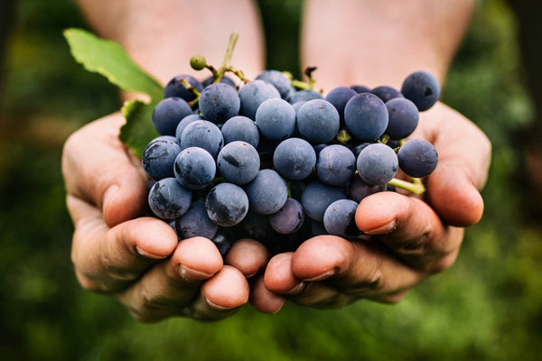 The Many Precious Polyphenols In Natural Wine