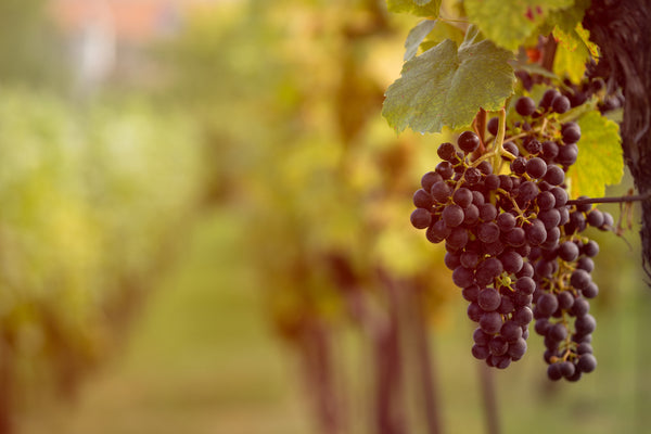 How Dry Farm Wines are different from Commercial Wines