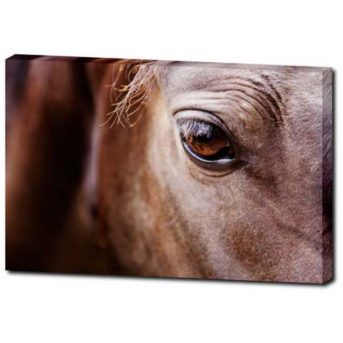 Eye of The Horse Premium Canvas Gallery Wrap