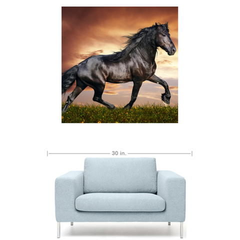 Friesian Horse Canvas Gallery Wrap