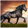 Image of Friesian Horse Canvas Gallery Wrap