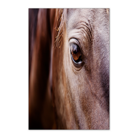 Look Into The Soul Horse Poster 24X36