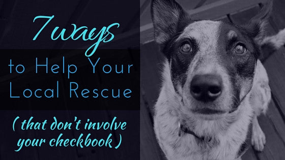 7 Ways to Help Your Local Rescue (That Don't Involve Your Checkbook)