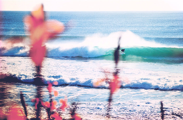 Surf photo by simon perini with flowers in the foreground
