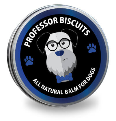 Professor Biscuits