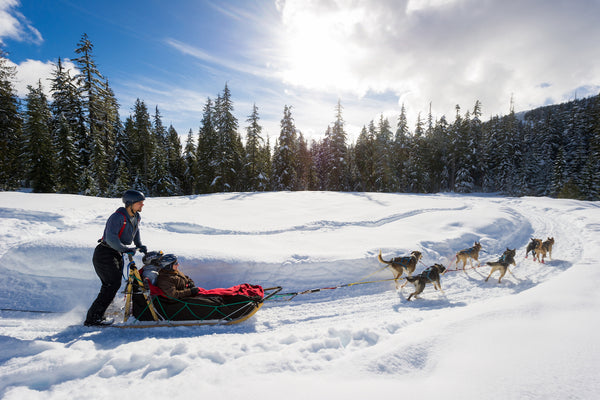 Dog sledding whistler