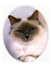 Ceramic Pet Photo | Oval | Colour. Various sizes available.