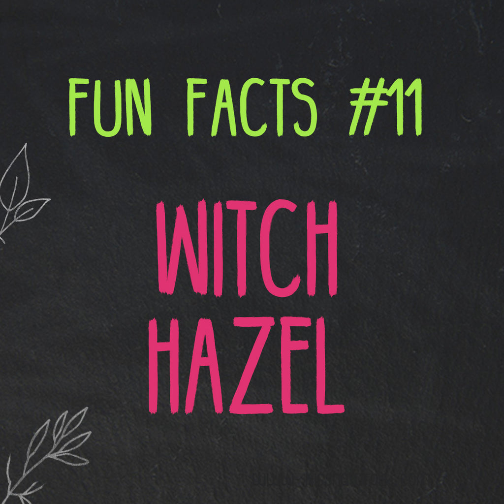 Fun Facts about Witch Hazel