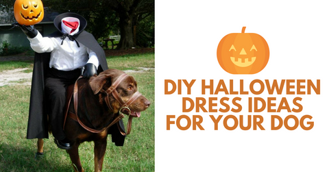 Do it yourself dress ideas for your dog this halloween pet clever diy unicorn dog costume solutioingenieria Choice Image