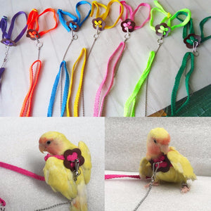 Colorful Bird Leash Outdoor Adjustable Harness Training Rope Bird Training Tools Pet Clever