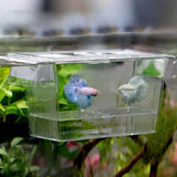 Fish Isolation Box Fish Tank Pet Clever