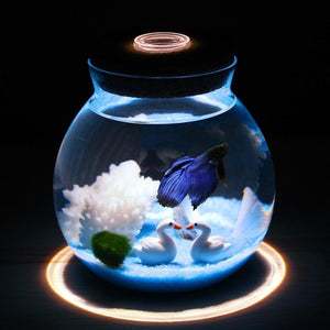 Mini Betta Fish Tank with Small Lights Fish Tank Pet Clever