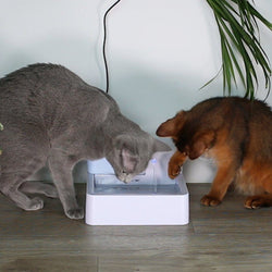Pet Clever Drinking Fountain For Freshest Water!