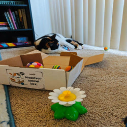 PetClever Meow! Box