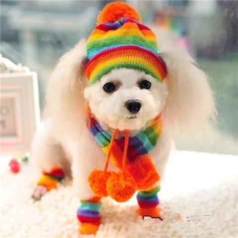 Pets Winter Knitted Striped Hat and Scarf Hats Pet Clever Colorful XXS