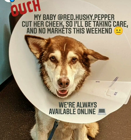 Pepper husky with cone