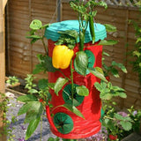 Two For One : 15 Hole Topsy Turvy Upside Down Strawberry Planters  Including Delivery