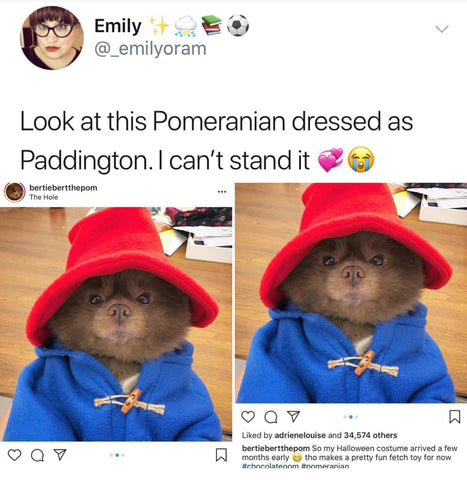 DHC Monthly Meme Roundup August Paddington Puppy