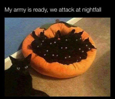 DHC Monthly Meme Roundup Halloween Edition Black Cat Army