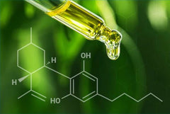 CBD Cannabis News Blog CTA