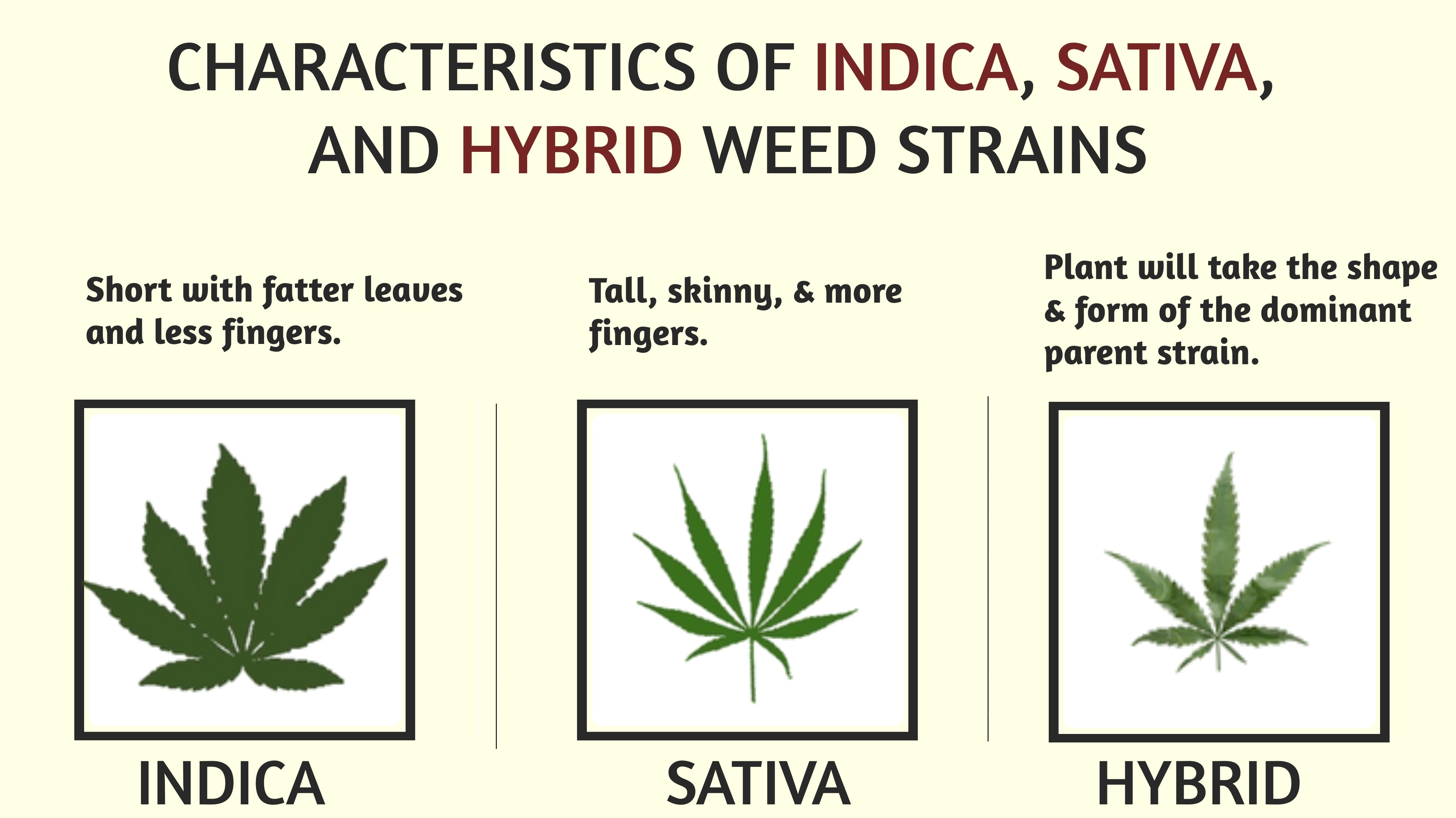 indica sativa and hybrid weed strains