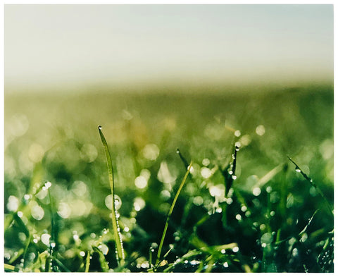 Green grass with dew on it photograph.