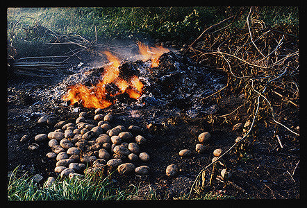 Burning Potatoes, Fen Road, Cambridge 1993