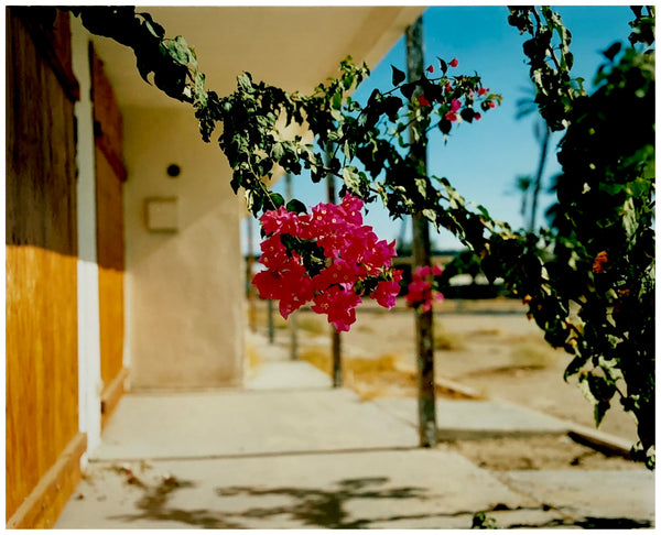 Bougainvillea, North Shore Motel, Salton Sea, California, 2003