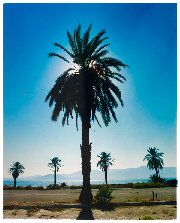 Palm Tree, Salton Sea, California, 2003