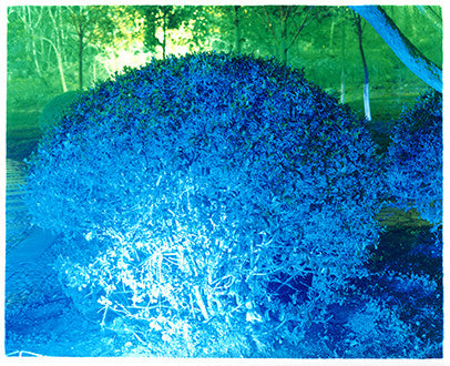 Blue Bush, Xuzhou, Jiangsu, 2013