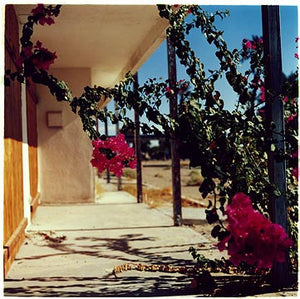Bougainvillea II, Salton Sea, California 2003