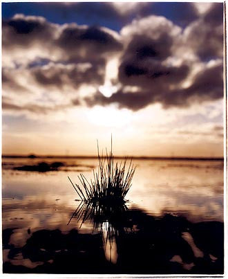 Tussock - Wicken Fen, Cambridge 2002