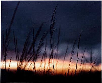 Grass, Binham, Norfolk 2003