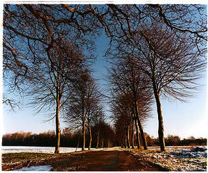 Avenue of Trees, Orsett Fen 2004