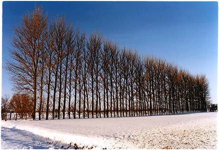Oakington Road - Poplars, Cottenham, Cambridgeshire 2003