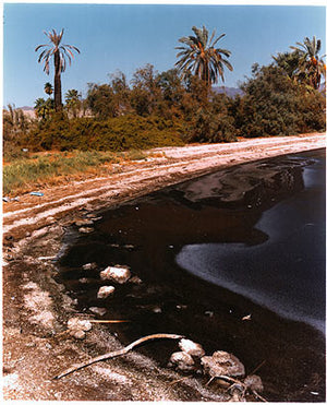 Shore Line, North Shore, Salton Sea, California 2003