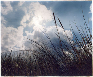 Grass II, Scoult Head, Norfolk 2005