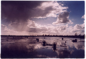Baker's Fen II, Wicken 2002