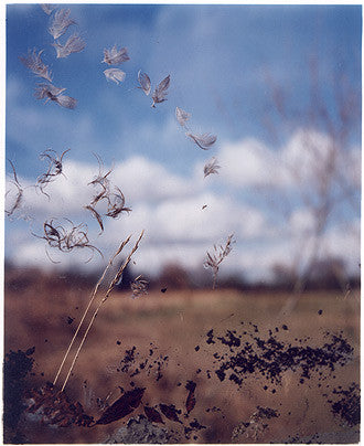 Jane Frost's Traces, Wicken Fen 2002