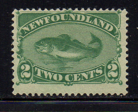 Newfoundland Scott 47 1896 2 c green Codfish stamp mint