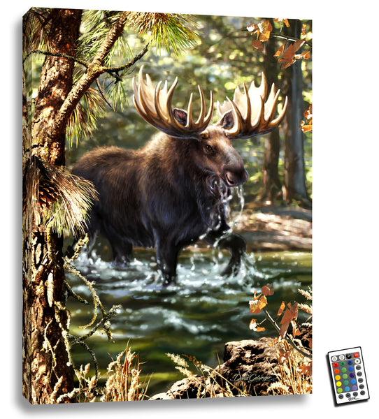 Moose Crossing - Illuminated Fine Art