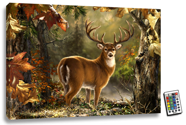 Whitetail - Illuminated Fine Art