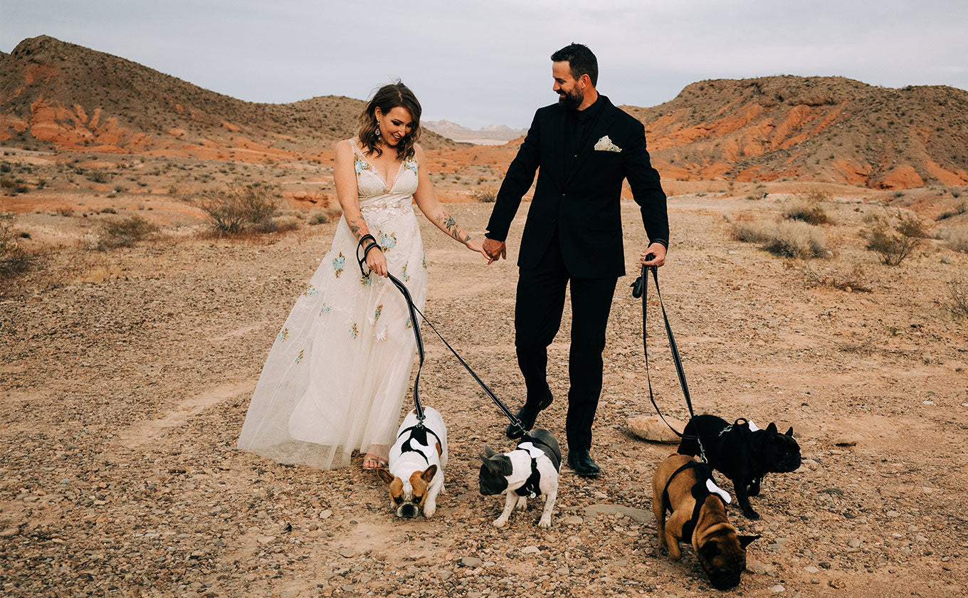 Bride and Groom Walking with dogs