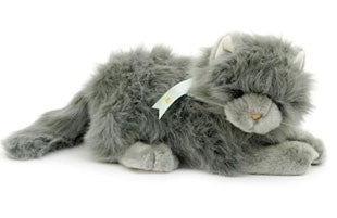 Soft Grey Cat