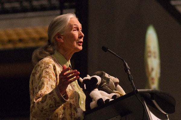 Jane Goodall Captures Our Hearts In a Powerful Video