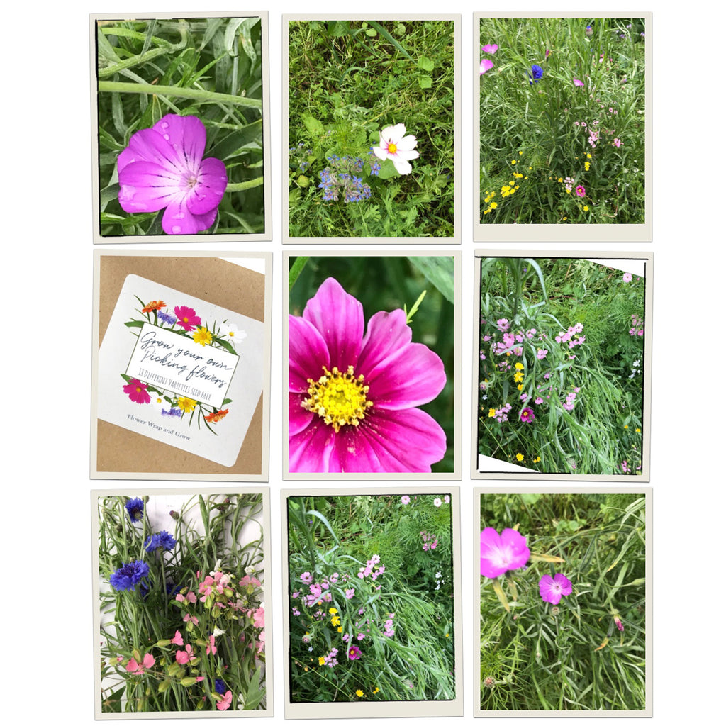 Grow your own picking flowers