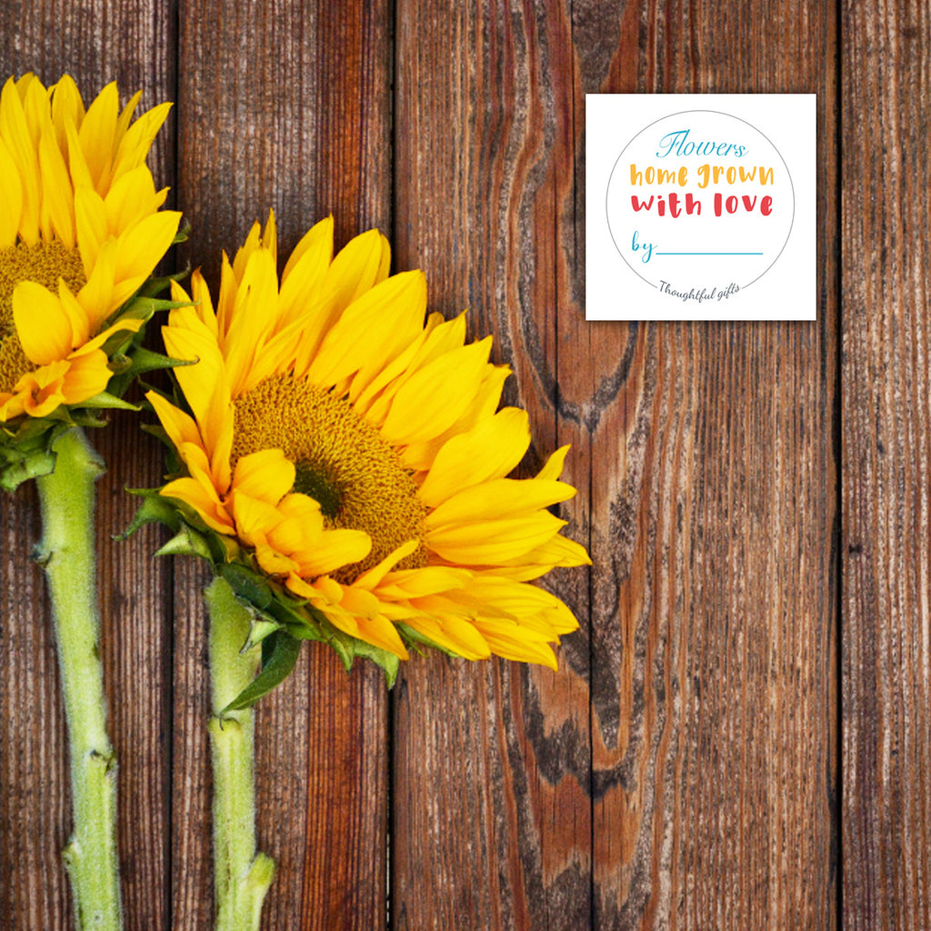 Sunflower Seeds Grown With Children To Gift As Presents