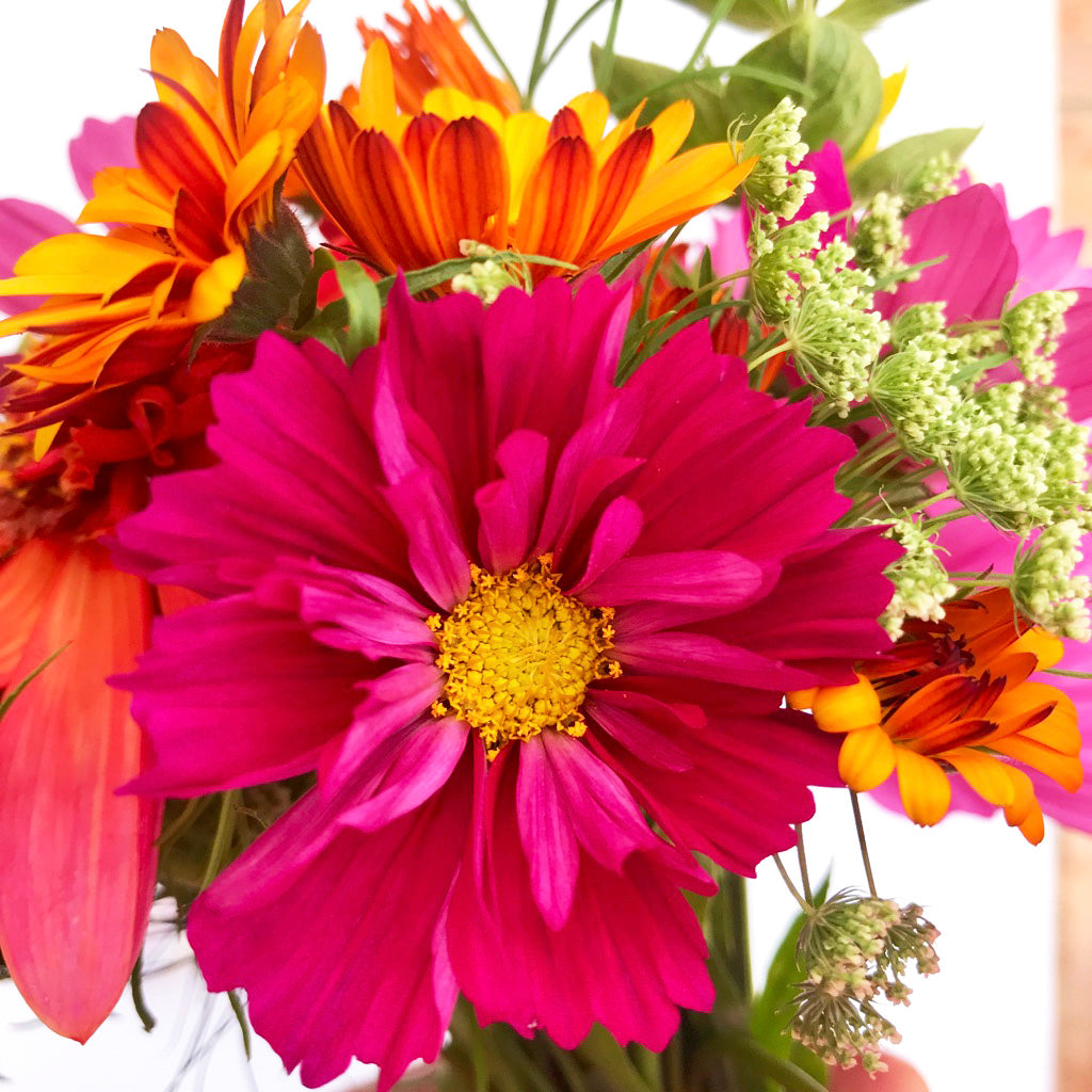 Hot Pink Cosmos Bouquet