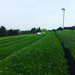 50 Major Tea Production Areas in Japan - An Evolving Project