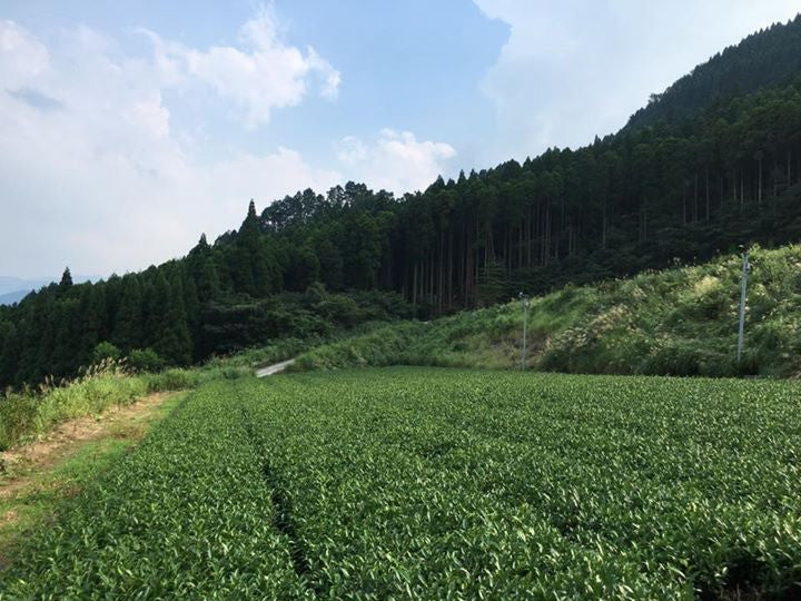 Key statistics about Japanese tea agriculture